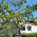 Obstbaum vor dem Physikgebäude